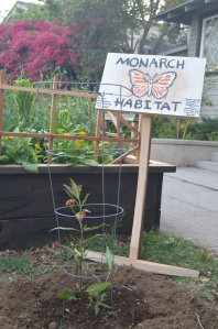 Monarch habitat
