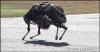 Google Cat Robot