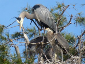 C_P1020785_MV_-_GBH_Busy_Parent_with_3_Babies_-_Photo_by_Lina_Shanklin