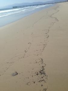 oil spill2