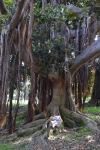 Man Sleeping Under Weeping Ficus (1)